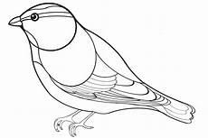 Malvorlage Vogel Spatz Spatz Ausmalbild Ausmalbilder Fur Euch Malvorlagen