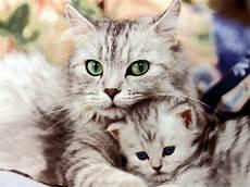 Koleksi Foto Lucu Kucing Kaget Kantor Meme