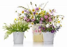 fiori vendita fiori di iris fiorista in via giulio cesare procaccini