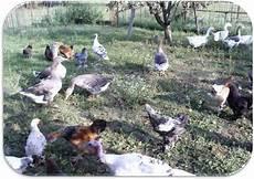 vendo animali da cortile gli animali da cortile il mondo degli animali