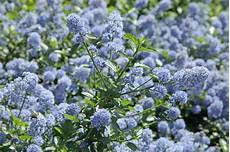 12 plantes qui ne craignent pas la s 233 cheresse gamm vert