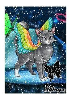 690 best cats with wings images pinterest punch
