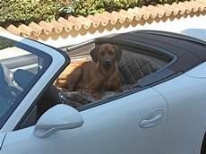 hundetransport auto rückbank hundetransport r 252 ckbank r 252 cksitz notsitz hund porsche 911