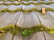 Moos Auf Dem Dach Osmo Clean