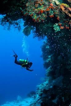 whitsundays top 5 scuba dive sites adreno scuba diving