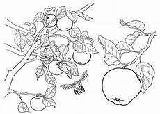 Mytoys Malvorlagen Resep Malvorlage Apfel Gro Tiffanylovesbooks