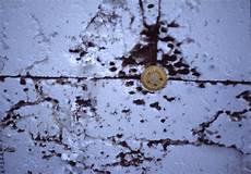 Richtigsanieren De Wdvs Feuchte Ameisen Schwamm