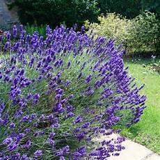 fleur exterieur sans entretien plante m 233 diterran 233 enne sans arrosage aj96 jornalagora