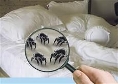 Milben Im Bett Erkennen Table Basse Relevable