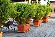 grande jardinière pour bambou choisir un bambou pour un pot ou une jardini 232 re gamm vert