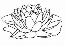 disegni fiore di loto disegno di fiore di loto