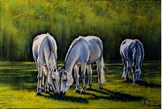 adelheids schimmel pferde sommer wiese natur