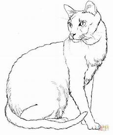 Ausmalbilder Siamkatze Cat 7 Coloring Page Free Printable Coloring Pages