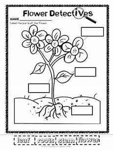 plant parts worksheet kindergarten free 13667 plants label the parts by s brain martin tpt