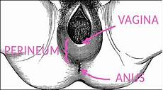 Perineal Tear Perineal Care After Baby Is Born Kopa Birth 174