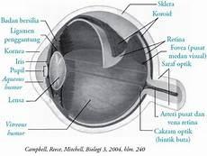 Fungsi Mata Pengertian Struktur Bagian Kelainan Anatomi