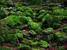 Gambar Pohon Alam Batu Menanam Daun Bunga Lumut