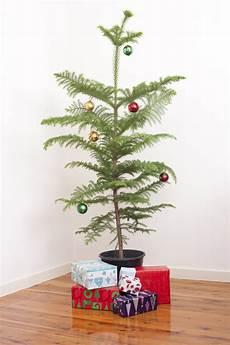 Weihnachtsbaum Im Topf So H 228 Lt Die Tanne L 228 Nger