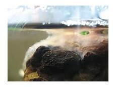 Pilz Am After - puffercube fungi