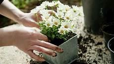 Pflanzen Ungeziefer Befreien 6