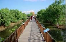 Wisata Hutan Mangrove Wonorejo Surabaya Yang Wajib