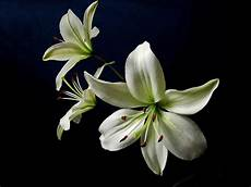 White Flowers Hd Images by White Wallpaper And Background Image 1800x1350 Id