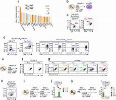 ifnγ induces epigenetic programming of human t bethi b cells and promotes tlr7 8 and il 21