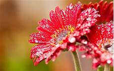 flower images hd hd flower background hd backgrounds pic