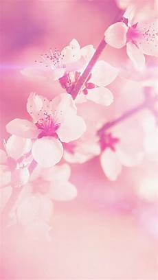 flower wallpaper iphone se flower pink cherry blossom flare nature iphone se