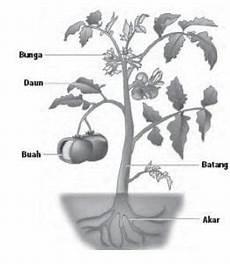 Penjelasan Organ Pada Tumbuhan Beserta Fungsi Dan Strukturnya