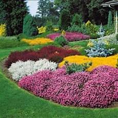 fleur exterieur sans entretien 1000 images about massif fleurs on autumn