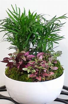10 low light indoor plants the can thrive in your home and