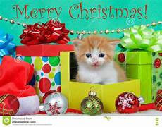 kitten merry christmas with text image of orange happy 77460944