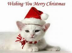 christmas christmas kitten merry christmas cat kitten wallpaper