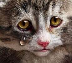 39 Paling Top Dp Gambar Kucing Sedih