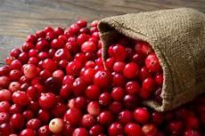 Blasenentzündung Ohne Brennen - cranberry hilfe bei blasenentz 252 ndung wie funktioniert