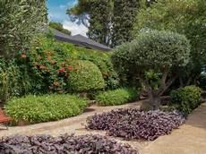 olivenbaum kaufen darauf m 252 sst ihr beim olivenbaumkauf