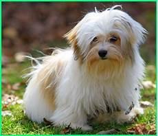 45 Jenis Anjing Terkenal Di Dunia Gambar Dan