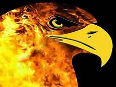 Gambar Burung Elang Api Pickini