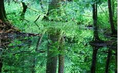 bialowieza robin wood