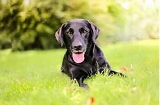 Check24 Auswertung Die Beliebtesten Hunderassen 2017