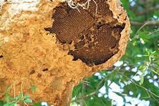 wespen wie entfernt ein wespennest mein bau