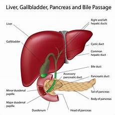 gallbladder diagram where are the kidneys and liver located