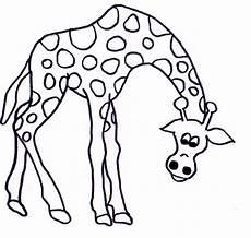 ausmalen giraffe malvorlagentv