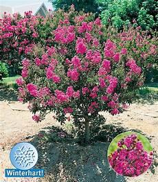 Pflanzen Winterhart Balkon - flieder des s 252 dens garten str 228 ucher garten und garten
