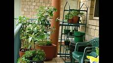 apartment food container gardening getting started