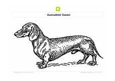 Hunde Ausmalbilder Dackel Ausmalbilder Hunde Kostenlose Ausmalbilder