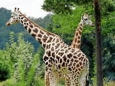 Gutschein Zoo Leipzig - zoo leipzig gutschein 2019 gutschein4dich de
