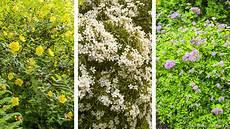 Haie Fleurie Toute L 233 E Arbuste 224 Fleur Et Gramin 233 Es