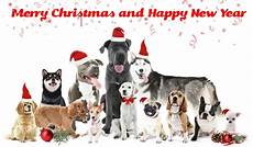 25 unique dog christmas cards for animal